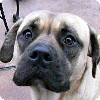Adopt A Pet :: Lucille - Oakley, CA