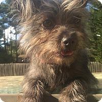 Adopt A Pet :: Coco - Smyrna, GA