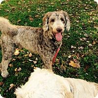 Adopt A Pet :: Tiki - Nanuet, NY