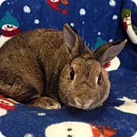 Adopt A Pet :: LeeLoo - Williston, FL