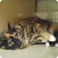 Adopt A Pet :: Marilyn - New Castle, PA