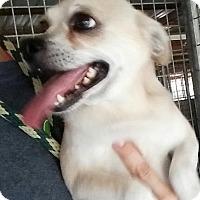 Adopt A Pet :: Ben - Gainesville, FL