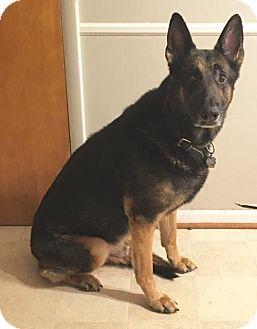 German Shepherd Dog Dog for adoption in Baltimore, Maryland - Sitka