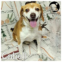 Beagle Mix Dog for adoption in Pittsburgh, Pennsylvania - Cabell