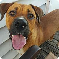 Adopt A Pet :: Carmel - Willingboro, NJ