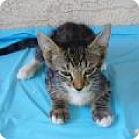 Adopt A Pet :: Howi - Mission Viejo, CA