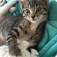 Adopt A Pet :: Rio - Island Park, NY