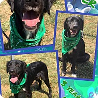 Adopt A Pet :: JAGGER - Lexington, NC