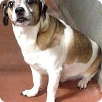 Adopt A Pet :: Max - Spokane, WA