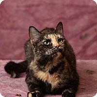 Calico Cat for adoption in Harrisonburg, Virginia - Consuela