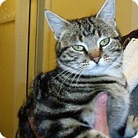 Adopt A Pet :: Cindy Lou - Gunnison, CO