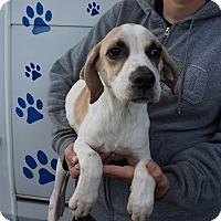 Adopt A Pet :: Mozart - Oviedo, FL