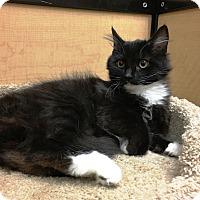 Adopt A Pet :: Luna - Riverside, CA