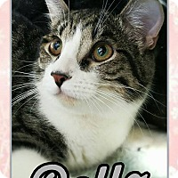 Adopt A Pet :: Belle - Edwards AFB, CA