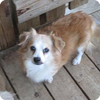 Adopt A Pet :: Brody - Oakdale, TN