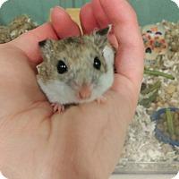 Adopt A Pet :: Latke - Bensalem, PA