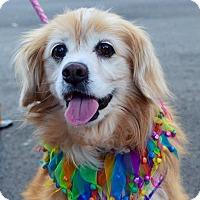 Adopt A Pet :: Winnie - Charlotte, NC