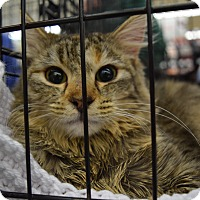 Adopt A Pet :: Miss Conner - Washington, PA