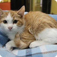 Adopt A Pet :: Brandon - Benbrook, TX