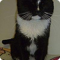 Adopt A Pet :: William - Hamburg, NY