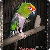 Adopt A Pet :: Sunny - Lexington, GA