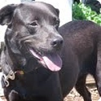 Adopt A Pet :: Josie - Lewisville, IN