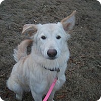 Adopt A Pet :: Monroe - Marietta, GA