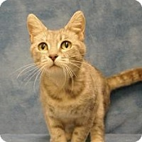 Adopt A Pet :: Jewel - Sacramento, CA
