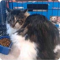 Adopt A Pet :: Baxter (RV) - Little Falls, NJ