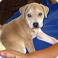 Adopt A Pet :: Baby Jimbo - Oakley, CA