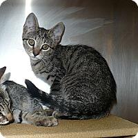 Adopt A Pet :: Jimmie - Colmar, PA