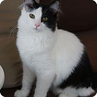 Adopt A Pet :: Seamus - St. Louis, MO