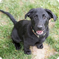 Adopt A Pet :: Patrick - Drumbo, ON