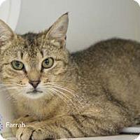 Adopt A Pet :: Farrah - Merrifield, VA
