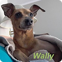Adopt A Pet :: Wally - Adoption Pending! - Huntsville, ON