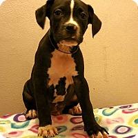 Adopt A Pet :: Phoenix - Lima, OH