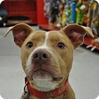 Adopt A Pet :: Freddy - Kimberton, PA
