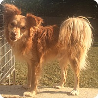 Adopt A Pet :: Jonas - Smyrna, GA