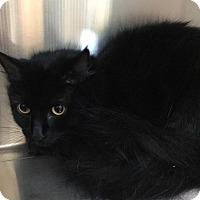 Adopt A Pet :: Mimi - Webster, MA