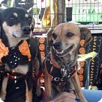Adopt A Pet :: Gracie and Gladys - Kingwood, TX