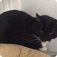 Adopt A Pet :: Slick - Greensburg, PA