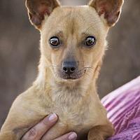 Adopt A Pet :: Mikki - El Cajon, CA