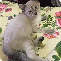 Adopt A Pet :: Jenny - Dallas, TX