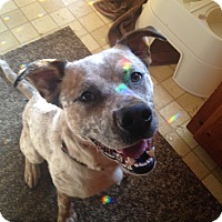 Adopt A Pet :: Boomer - Cleveland, OH