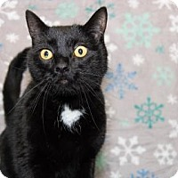 Adopt A Pet :: Dippy - Lowell, MA