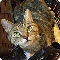 Adopt A Pet :: Angelica - Oakland, CA