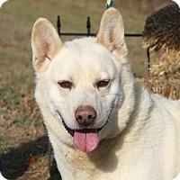 Adopt A Pet :: Charlie (Neutered)-New Photos - Marietta, OH