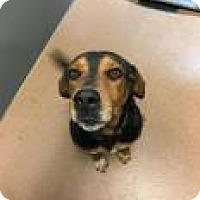 Adopt A Pet :: Jethro 3635 - Columbus, GA