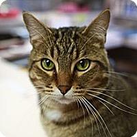 Adopt A Pet :: Marco - St. Petersburg, FL