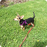 Adopt A Pet :: Brody - Washington, PA
